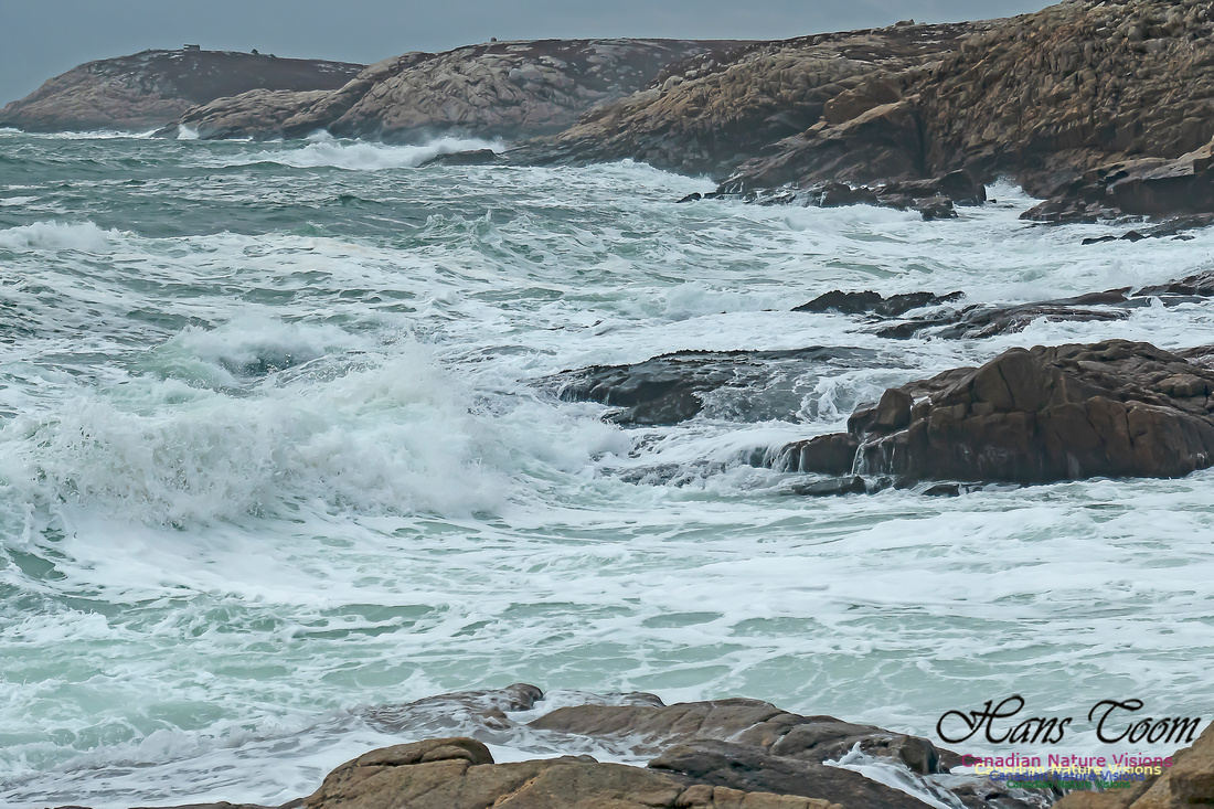 Blustery Morning at the Coastal Barrens 109