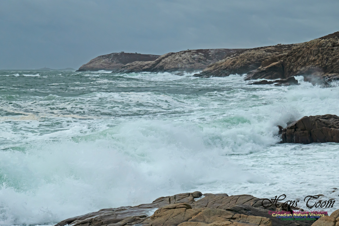 Blustery Morning at the Coastal Barrens 108