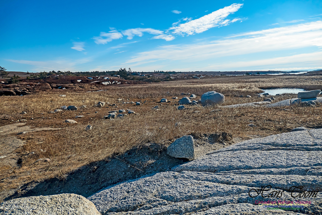 Sunny Morning on the Prospect Barrens 117