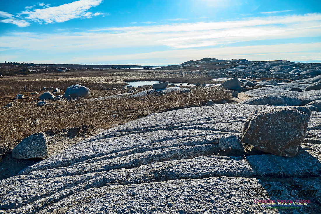 Sunny Morning on the Prospect Barrens 116