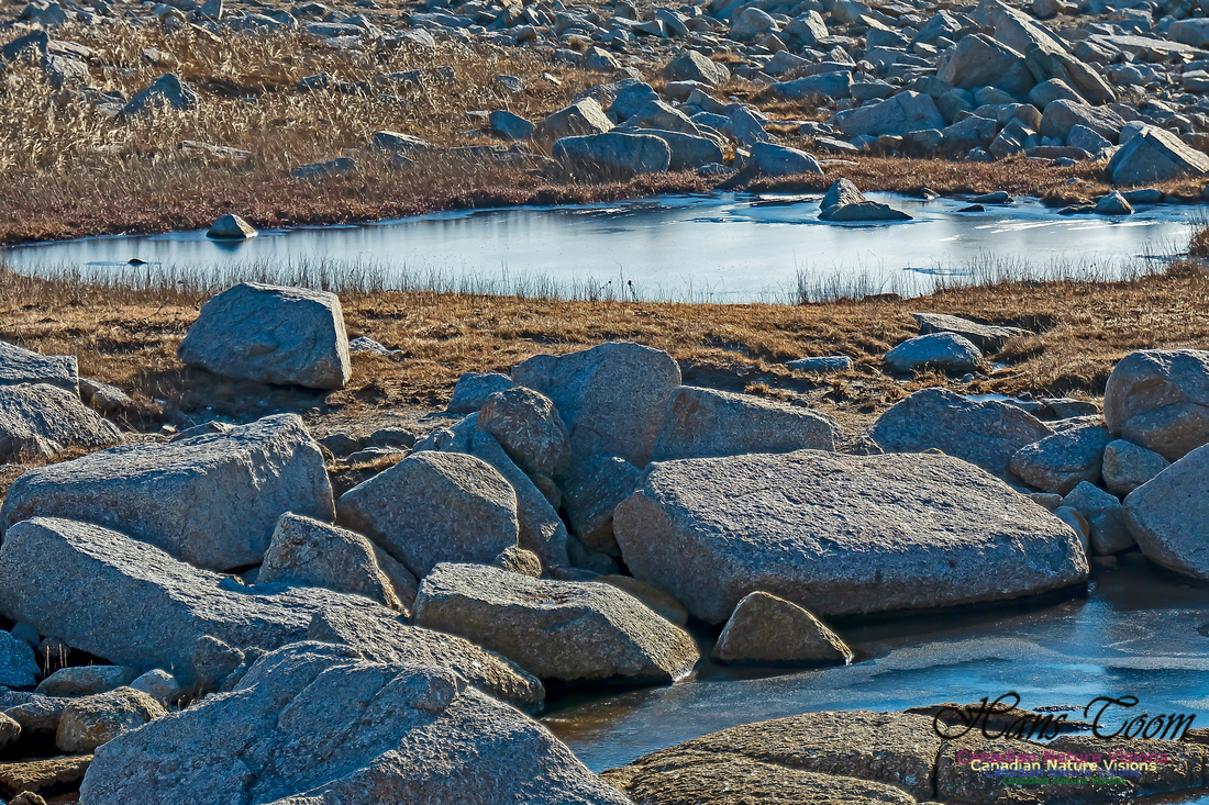 Sunny Morning on the Prospect Barrens 104