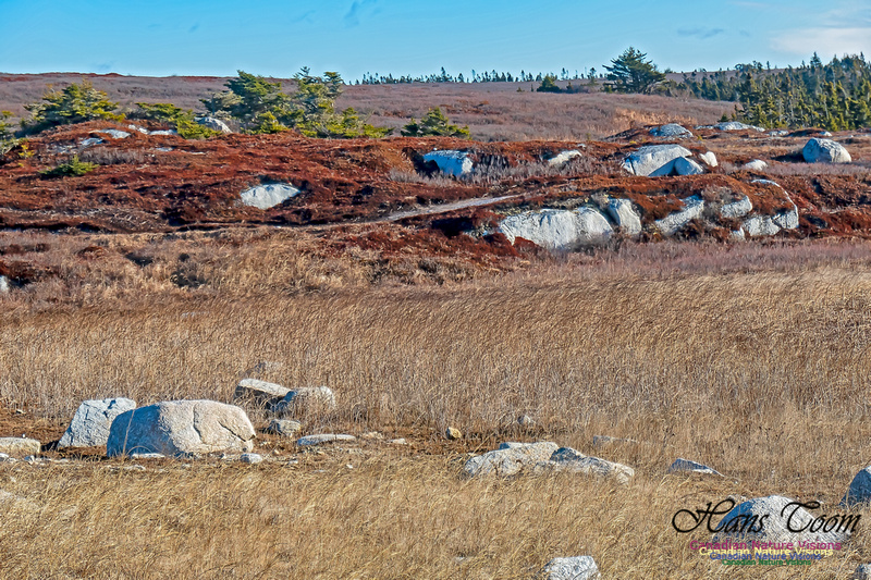 Sunny Morning on the Prospect Barrens 106
