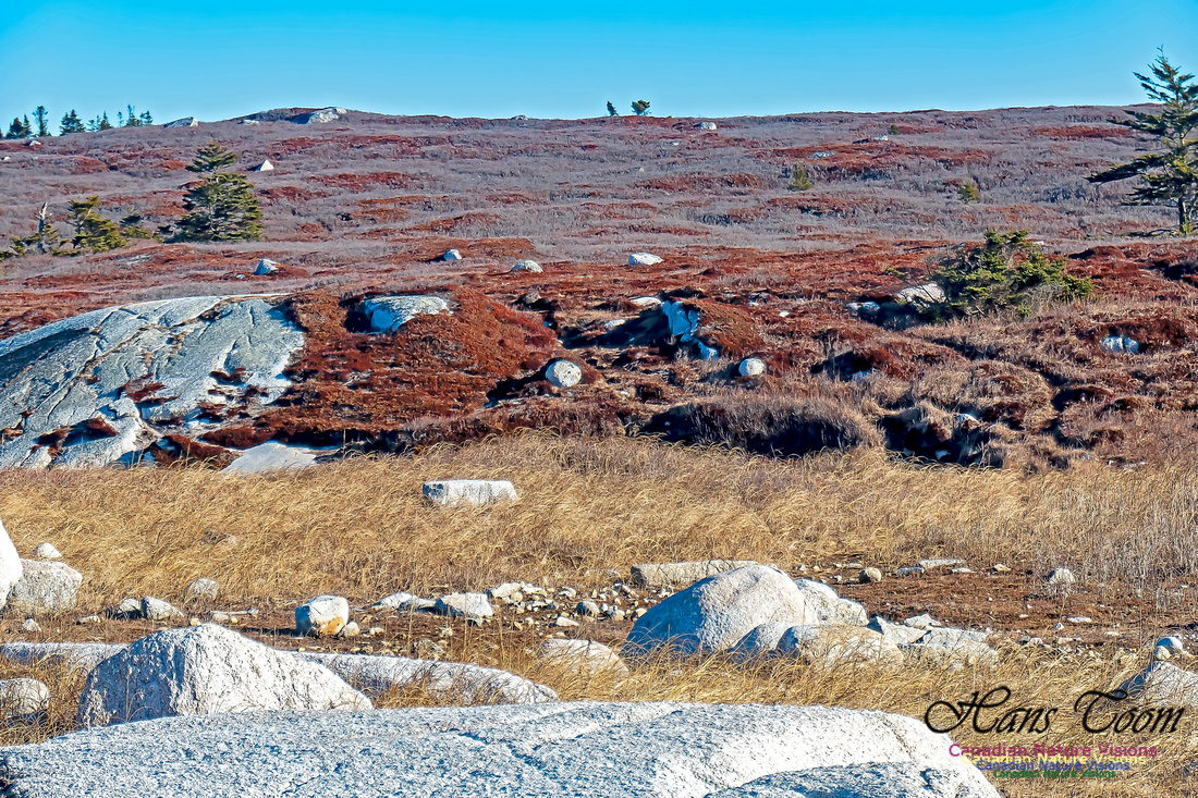 Sunny Morning on the Prospect Barrens 107