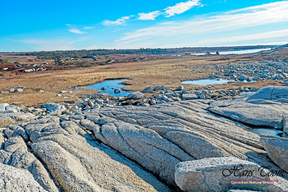 Sunny Morning on the Prospect Barrens 108