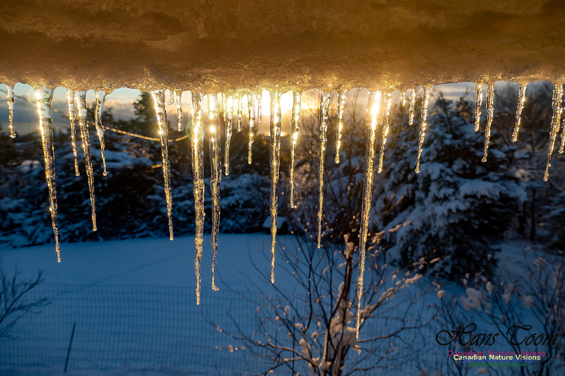 Roof Icicles on a Sunny Morning 107