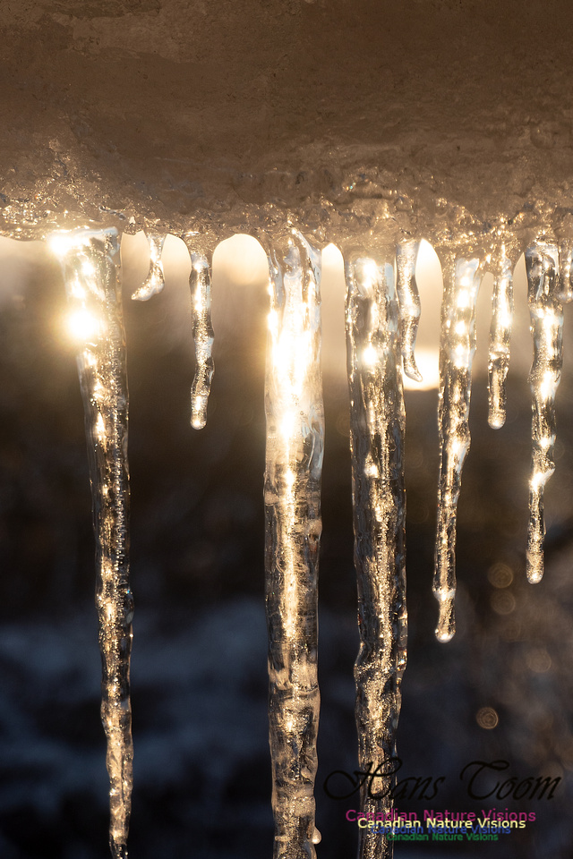 Roof Icicles on a Sunny Morning 110