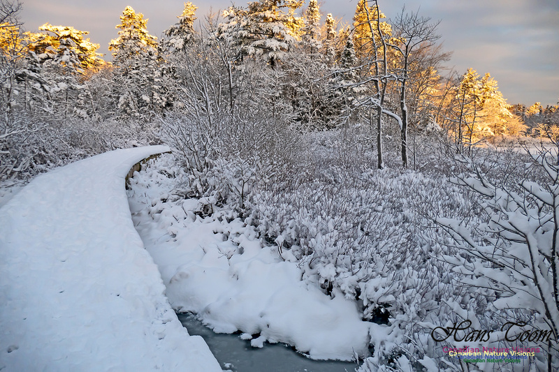 Snowy Secenes Early One Winter Morning 157