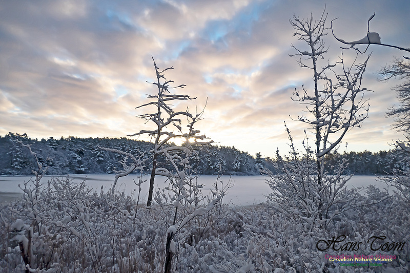 Snowy Secenes Early One Winter Morning 143