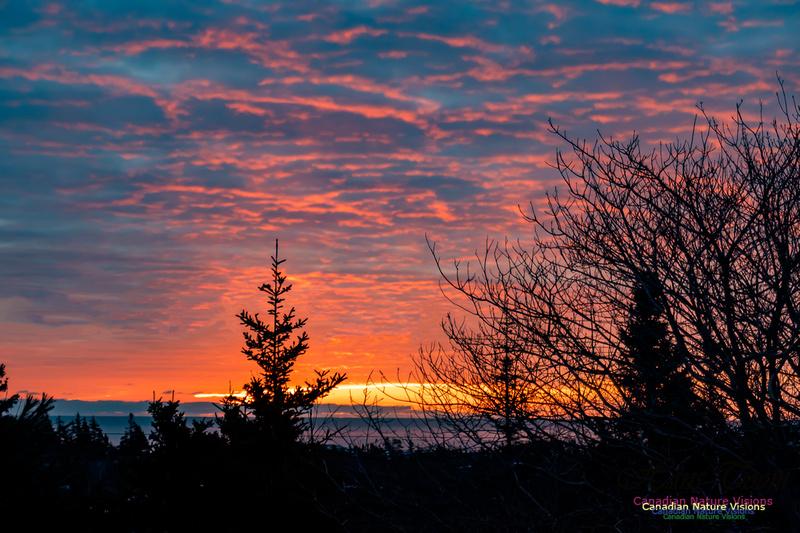 Unusual Sunrise 102