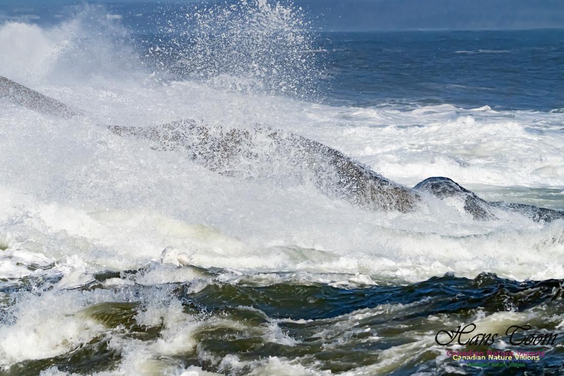 Surf on Rocks 100