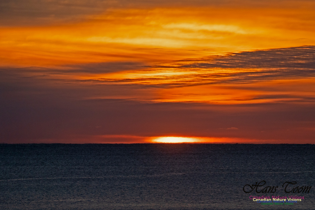 Herring Cove Sunrise 301