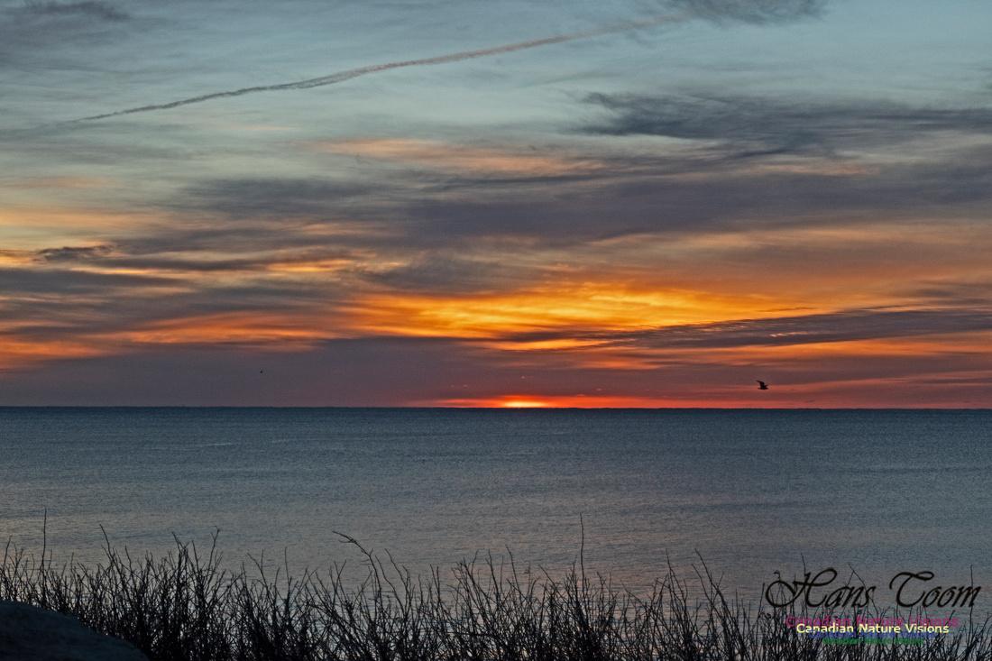 Herring Cove Sunrise 303