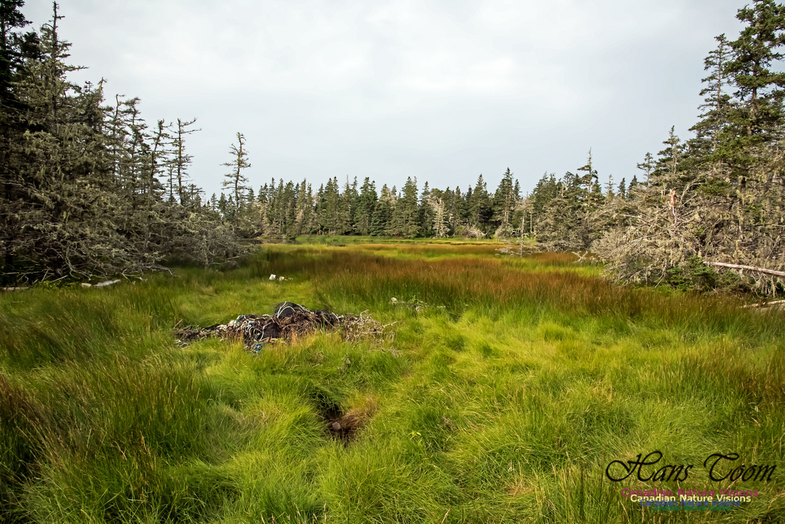 The North-east Corner of the Bog, North of the Pond, Troop Island