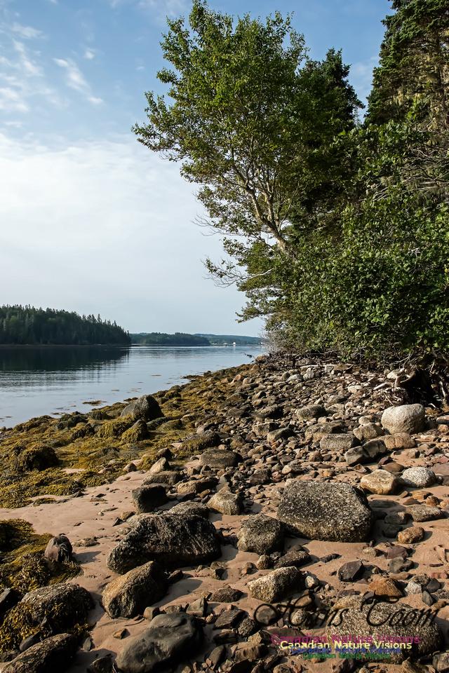 Troop Island Eastern Shoreline