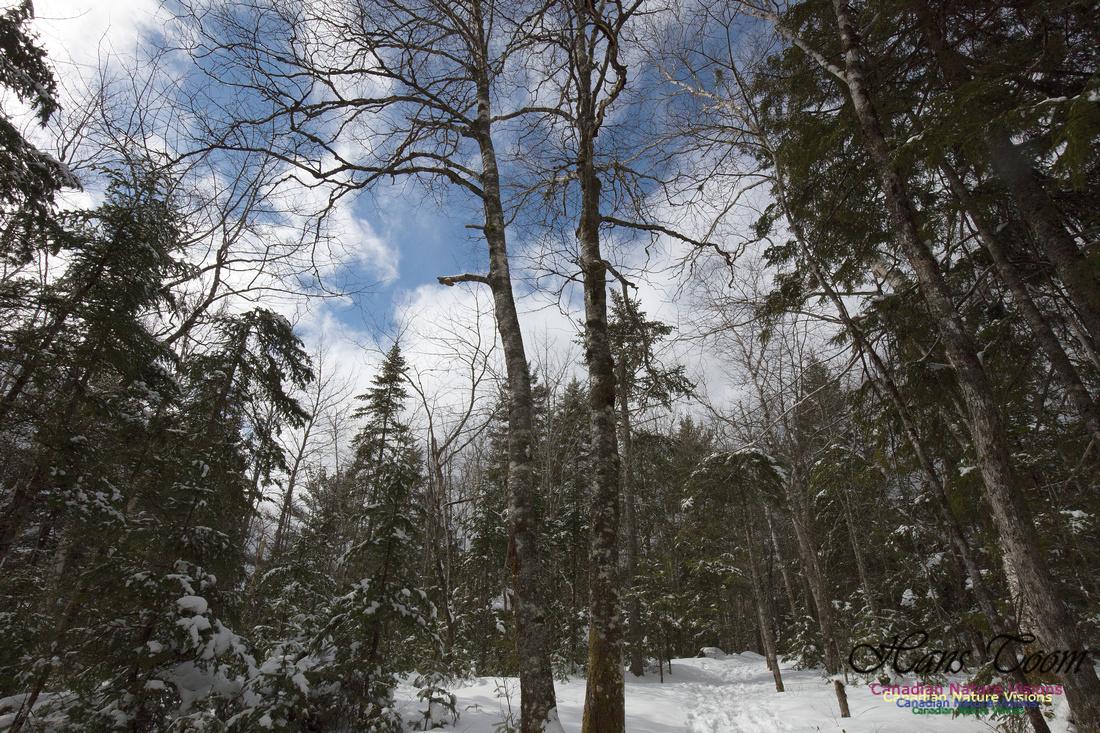 Woodlands in Spring  (12)