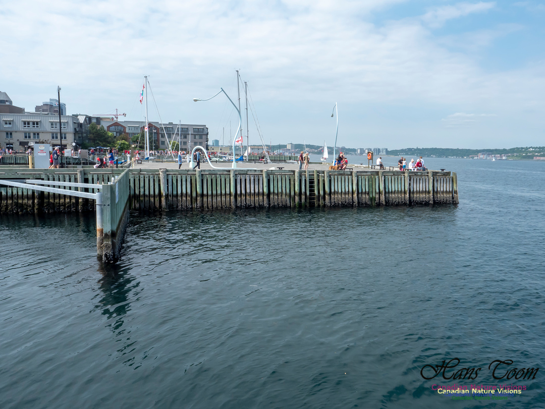 Canada Day Halifax Waterfront 2018 19