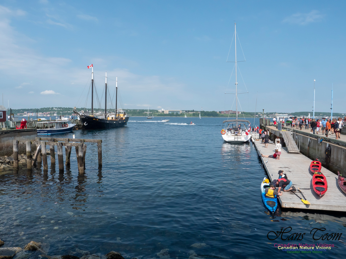 Canada Day Halifax Waterfront 2018 4