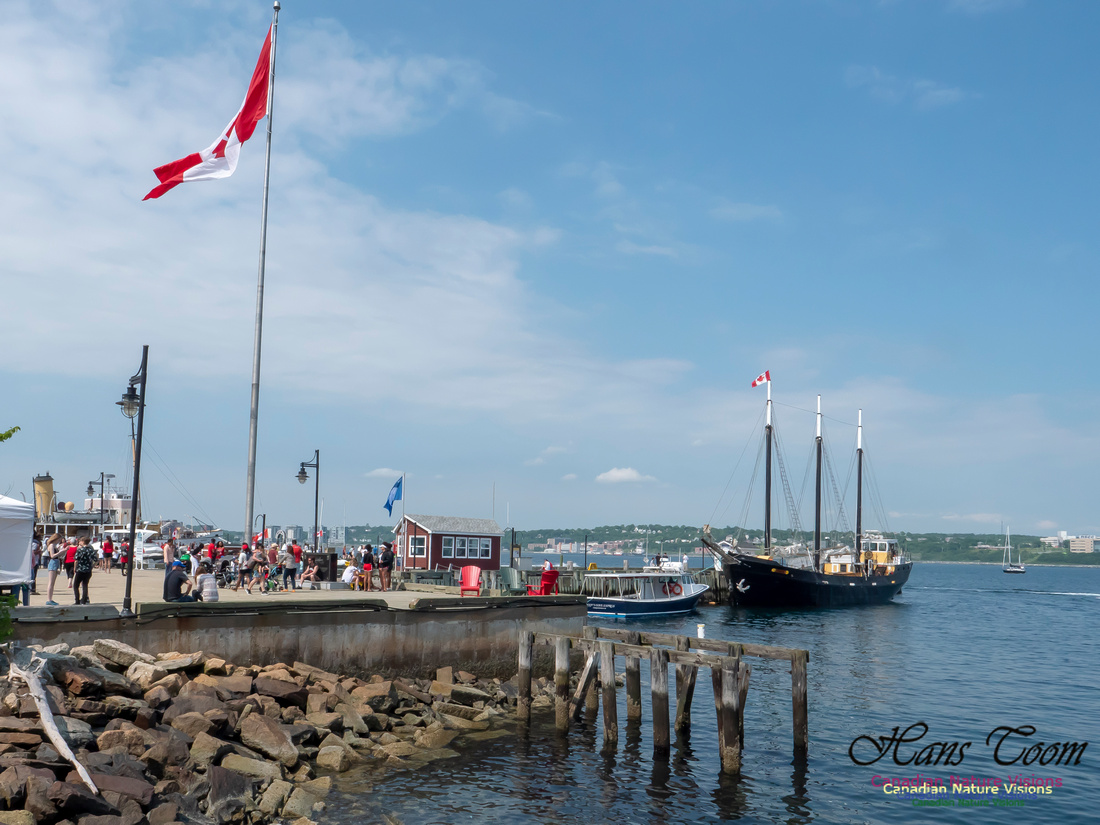 Canada Day Halifax Waterfront 2018 5