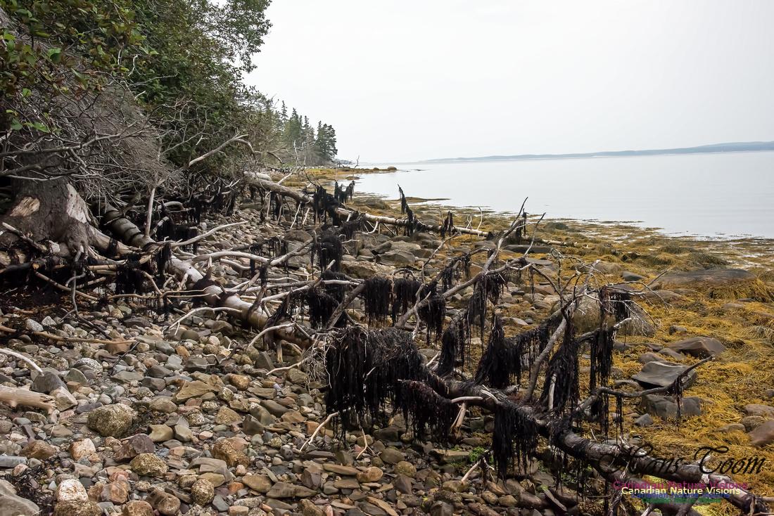 Troop Island Western Shoreline