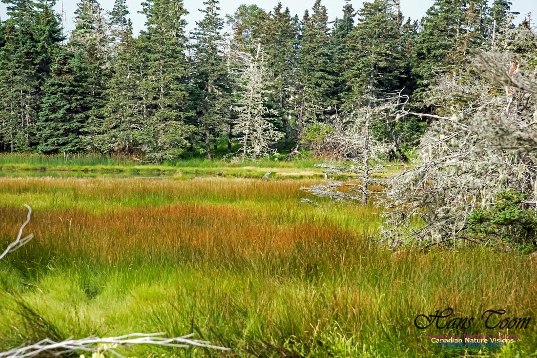 The Bog North of the Pond, Troop Island