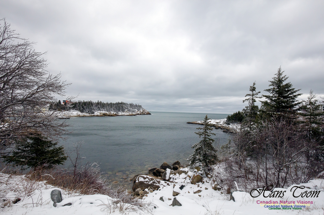 Chebucto Peninsula Early Spring Snow Storm (34)