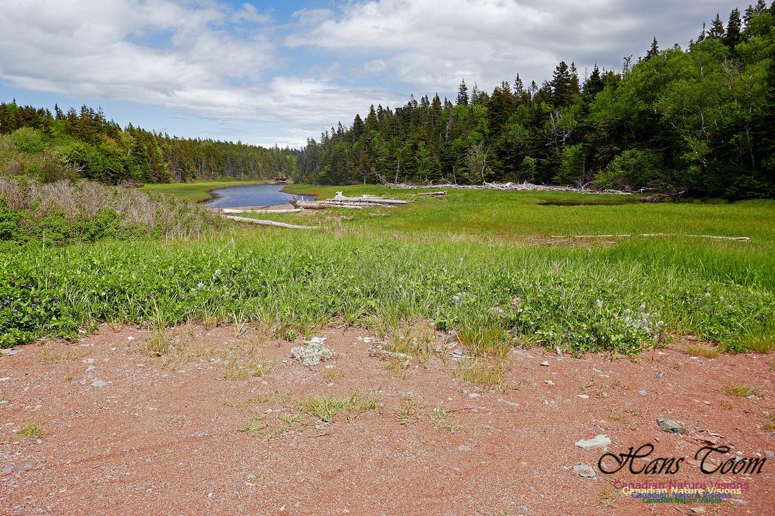 Cape Chignecto Provincial Park 1