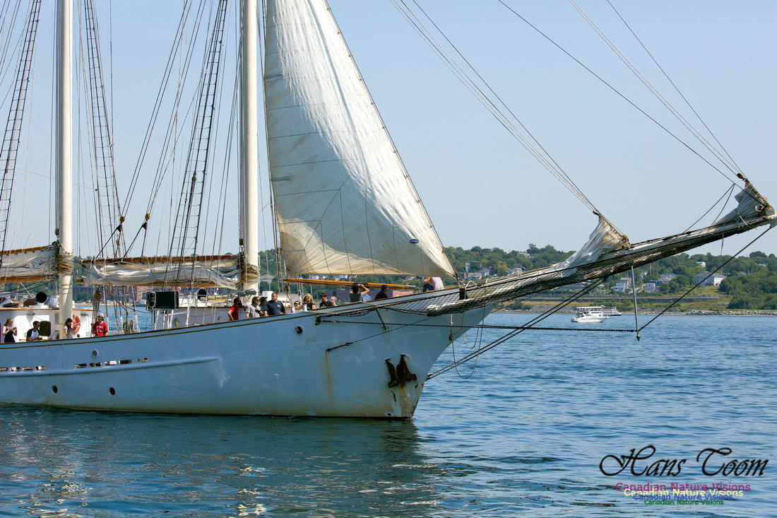 Blue Clipper 10