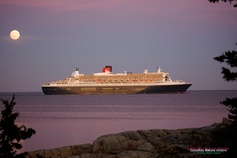 Queen Mary 2 27