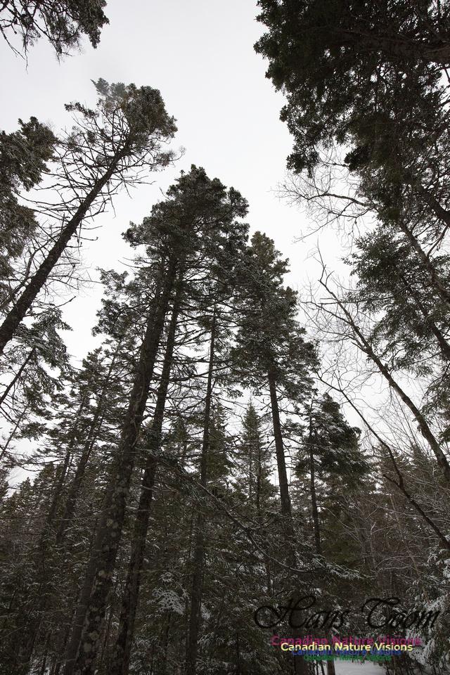 Woodlands in Spring  (3)