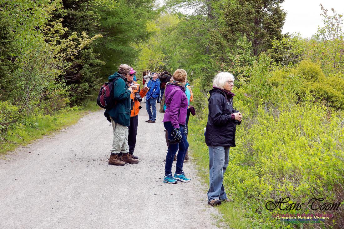 Warbler Walk Jerry Lawrence Provincial Park 2017 3