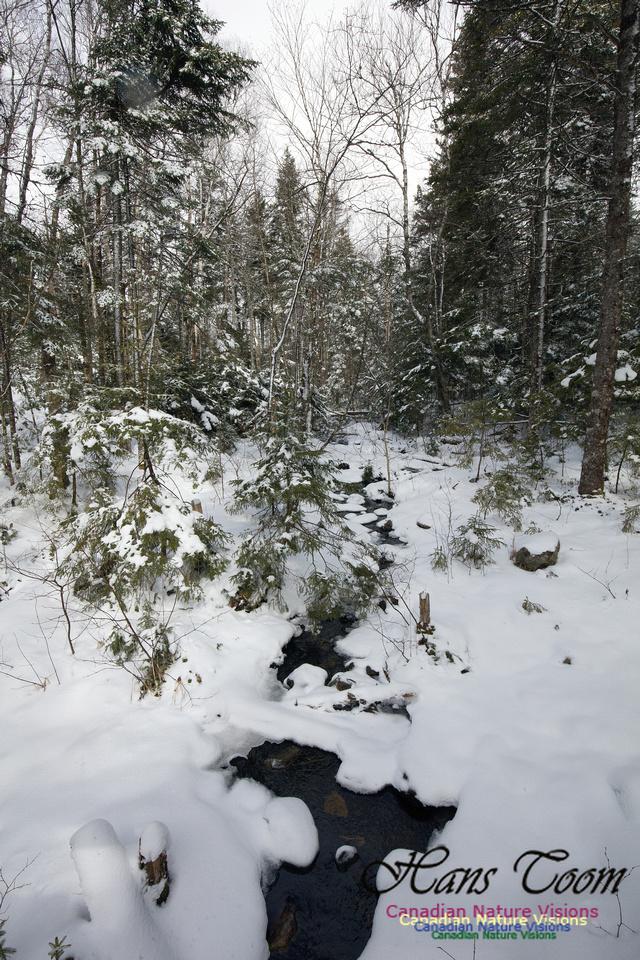 Woodlands in Spring  (10)