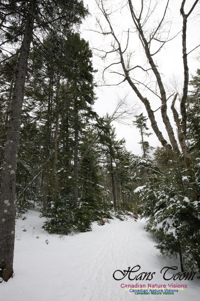 Woodlands in Spring  (30)
