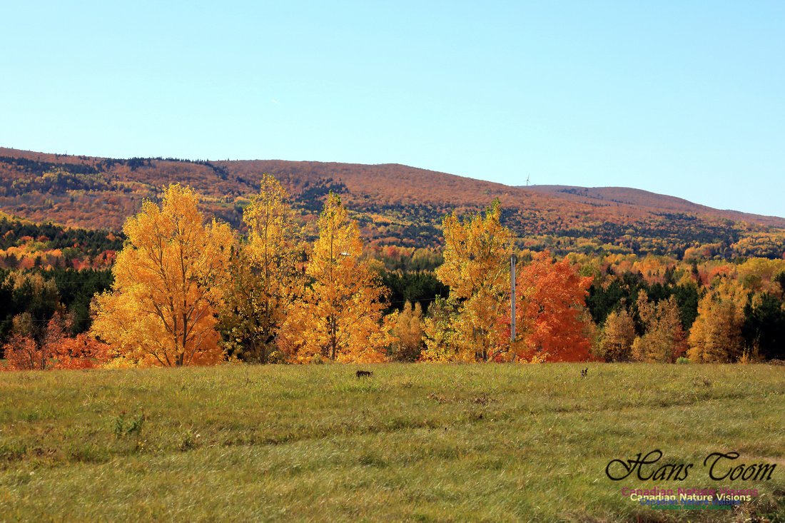 Maple Forest Fall Colours 2016