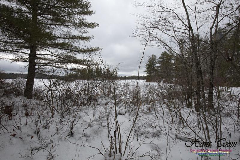 Woodlands in Spring  (16)