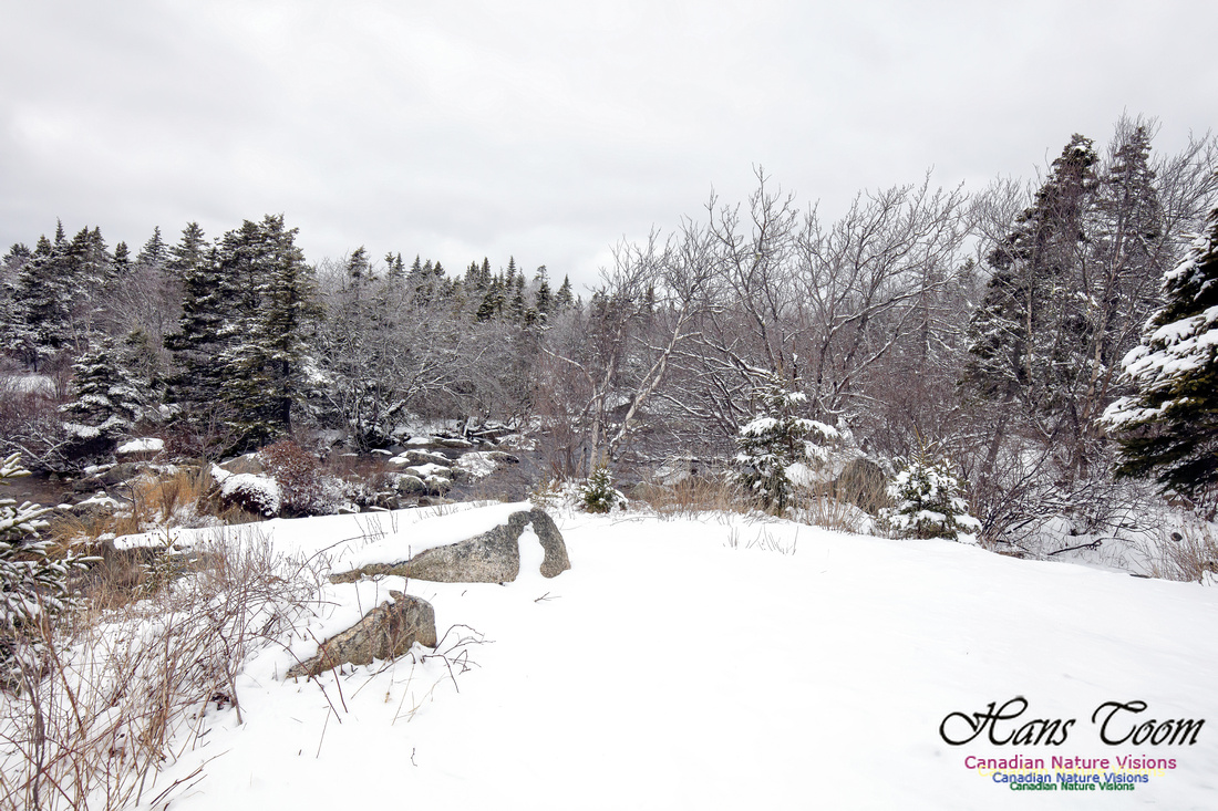 Chebucto Peninsula Early Spring Snow Storm (57)