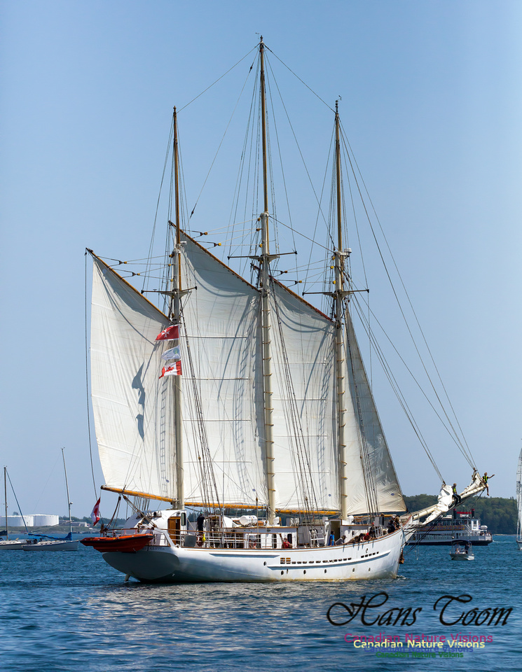 Blue Clipper 15