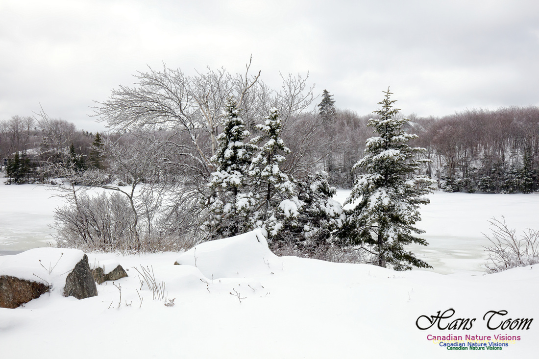 Chebucto Peninsula Early Spring Snow Storm (4)