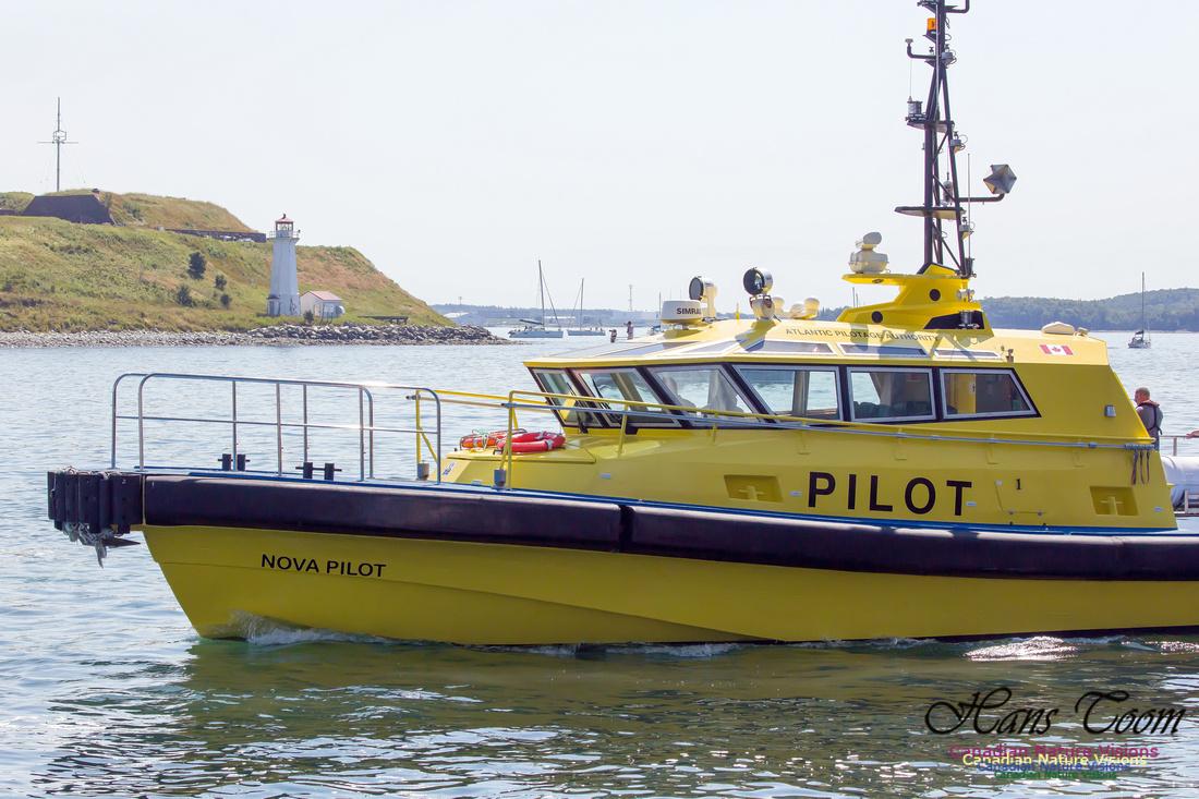 Nova Pilot 2