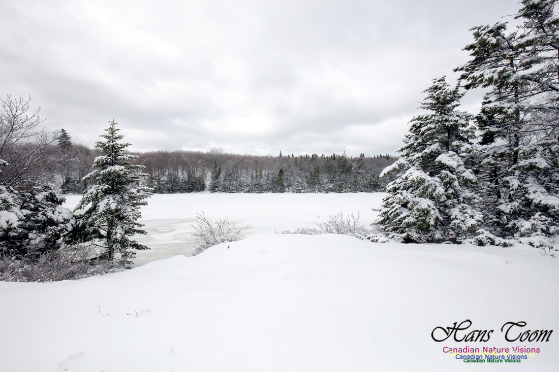 Chebucto Peninsula Early Spring Snow Storm (5)