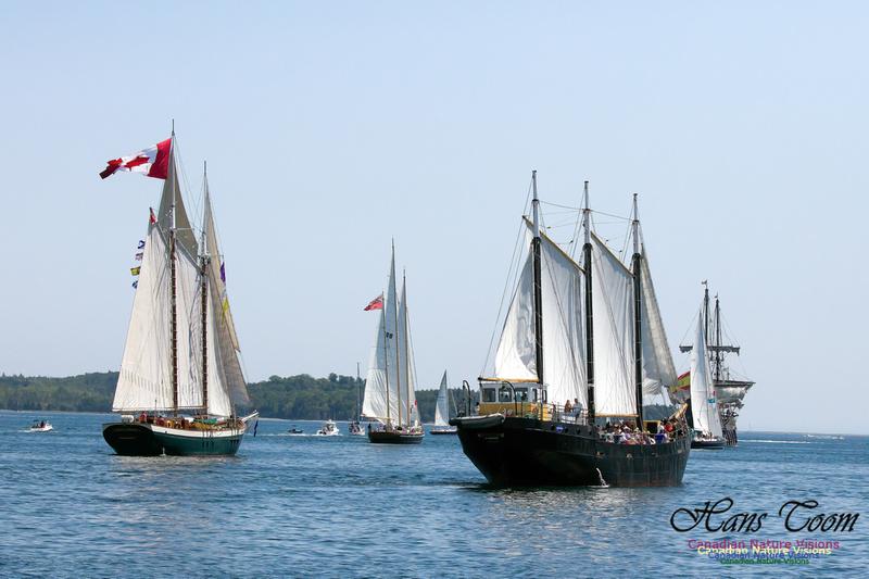 Flottila 1